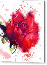 Red Rose. Watercolor Acrylic Print
