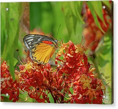 Acrylic Print featuring the photograph Red-spot Jezebel Butterfly Dthn0236 by Gerry Gantt