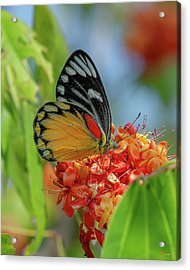 Acrylic Print featuring the photograph Red-spot Jezebel Butterfly Dthn0237 by Gerry Gantt