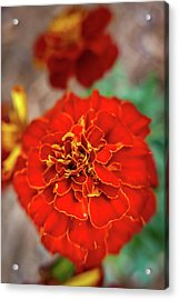 Red Summer Flowers Acrylic Print