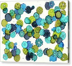 Reef Encounter #5 Acrylic Print