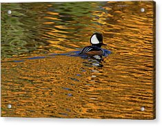 Reflecting With Hooded Merganser Acrylic Print