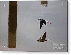 Reflection Of The Salton Sea Black Neck Stilt Flying Acrylic Print