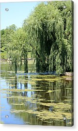 Reflections From Mother Willow Acrylic Print