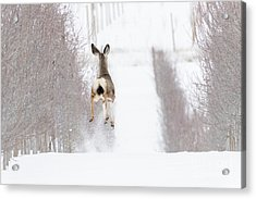 Reindeer In Training Acrylic Print