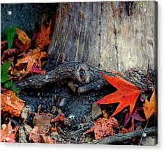 Remnants Of Autumn Acrylic Print