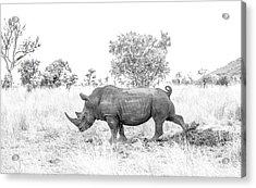 Rhino Business Acrylic Print