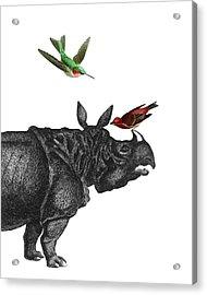 Rhinoceros With Birds Art Print Acrylic Print