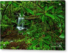 Rhododendron Waterfall Acrylic Print