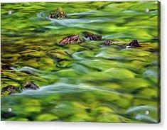 River Moss Acrylic Print by Leland D Howard