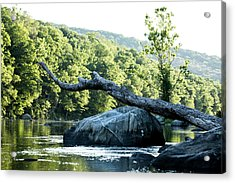 River Tree Acrylic Print