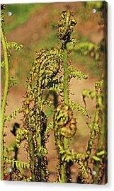 Rivington Terraced Gardens. Fern Frond. Acrylic Print
