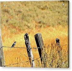 Rocky Mountain Blue Bird Acrylic Print
