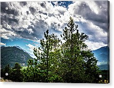 Acrylic Print featuring the photograph Rocky Mountain Pines by James L Bartlett