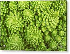 Roman Broccoli Isolated On White Acrylic Print