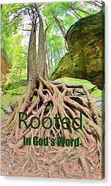 Rooted In God's Word Acrylic Print