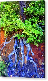 Acrylic Print featuring the photograph Roots Of Life by Ben Upham III