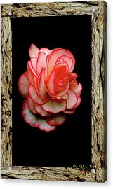 Acrylic Print featuring the photograph Rose by Ben Upham III