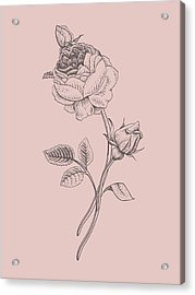 Rose Blush Pink Flower Acrylic Print