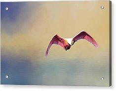 Roseate Spoonbill At Sunrise Acrylic Print