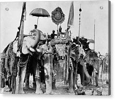Royal Elephants Acrylic Print by Hulton Archive