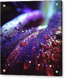 Ruby Blue Acrylic Print
