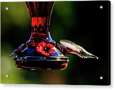 Acrylic Print featuring the photograph Ruby Throated Beak Deep by Onyonet  Photo Studios