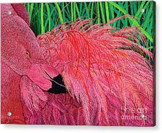 Ruffled Flamingo Acrylic Print