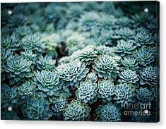 Rustic Macro Shot Of Cactus - Tropical Acrylic Print