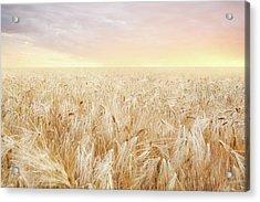 Rye Field Acrylic Print by Nadyaphoto