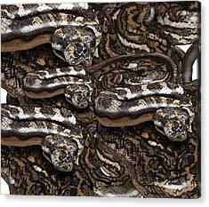 S Is For Snakes Acrylic Print