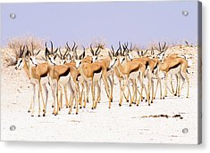 Safety In Numbers Acrylic Print
