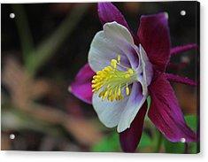Saffron Stamens I Acrylic Print