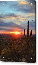 Saguaro Cactus And Tucson At Sunset Acrylic Print