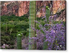 Saguaro Cactus Blooms And Ironwood Close Up Acrylic Print