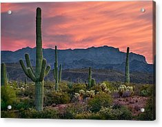 Saguaro Cactus With Arizona Sunset Acrylic Print
