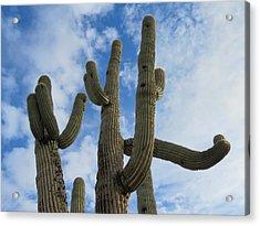 Saguaro Clique Acrylic Print