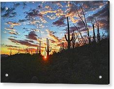 Saguaro Excellence Acrylic Print