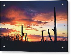 Acrylic Print featuring the photograph Saguaros Watch The Sunset by Chance Kafka