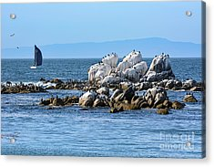Sailboat At Bird Rock Acrylic Print