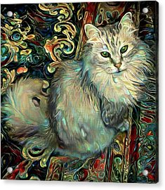Samson The Silver Maine Coon Cat Acrylic Print