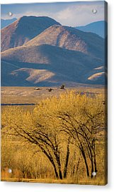Sandhill Cranes Near The Bosque Acrylic Print