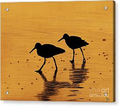 Sandpipers - At - Sunrise Acrylic Print