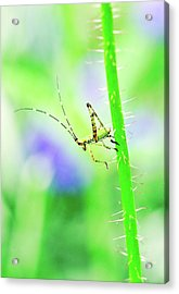 Say Hello To My Little Green Insect Friend Acrylic Print