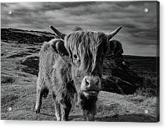 Acrylic Print featuring the photograph Saying Hello To A Highland Cow At Baslow Edge Black And White by Scott Lyons