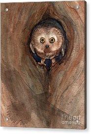 Scardy Owl Acrylic Print