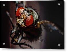 Scavenger Close-up Acrylic Print