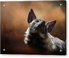 Acrylic Print featuring the photograph Scenting The Air - Striped Hyena by Debi Dalio