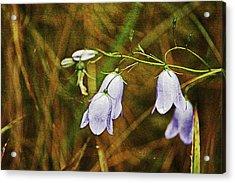 Scotland. Loch Rannoch. Harebells In The Grass. Acrylic Print