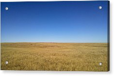 Sea Of Grass Acrylic Print